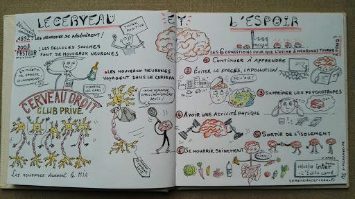 Sketchnote sur le cerveau