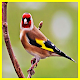 Sounds of Nature and Bird Singing 2018 No Internet Download on Windows