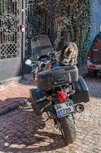 Photo: Motorradkatze ...