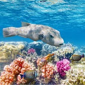 Underwater World Jigsaw