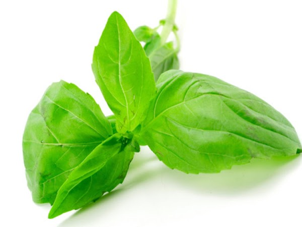 Wash and seperate Basil from stems.