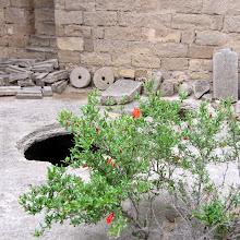 Photo: Granaattiomenapensas - ja aukko linnoituksen pihalla tarvikkeiden säiyttämistä varten - näitä oli monta eikä niitä tietenkään ollut aidattu tms. - toki turistit osaavat katsoa mihin astuvat!
