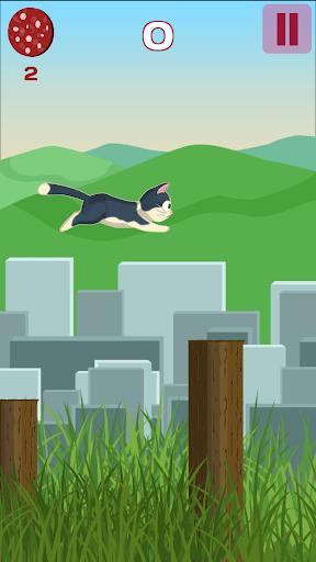 小猫跳跃 - 萨拉米冒险