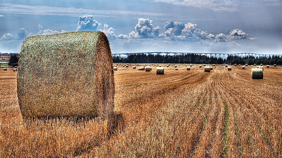 Hayroll by Salehin Chowdhury - Landscapes Prairies, Meadows & Fields