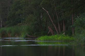 Photo: The river Peene, home of the European beaver.