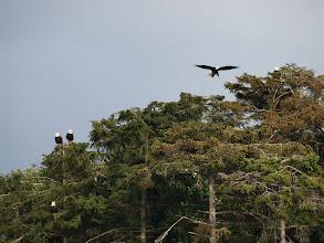 Photo: Eagles Roosting