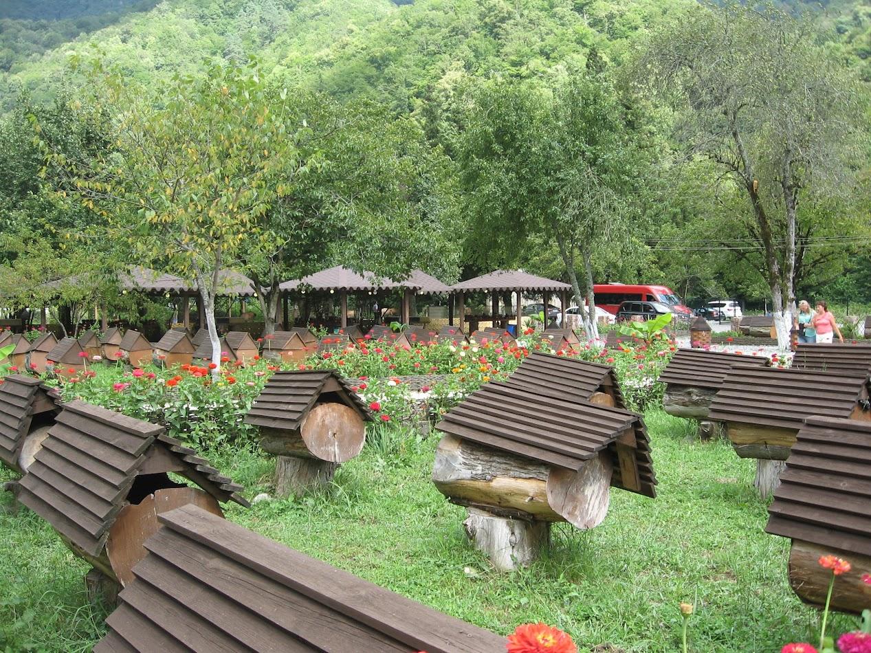 на пасике в Абхазии