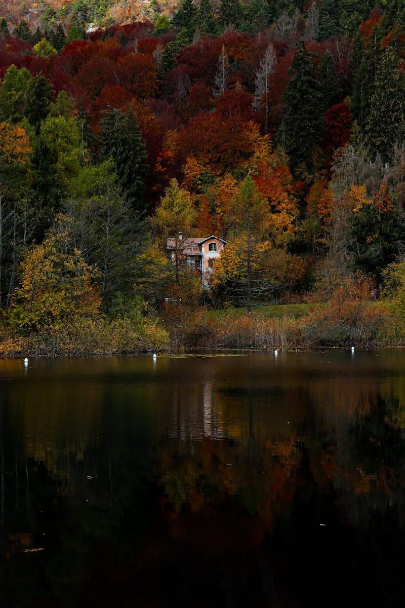 la casa nel bosco di Pietro_grigo