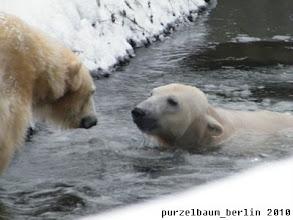 Photo: Knut nimmt ein Bad und schon wird Gianna neugierig :-)
