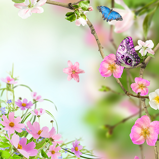 Flowers Live Wallpaper Apps On Google Play