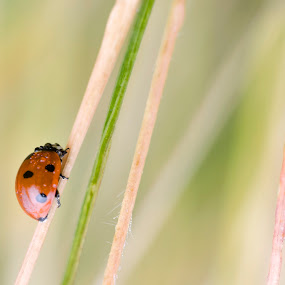 From stories by Cretu Stefan Daniel - Animals Insects & Spiders ( stories, autumn, ladybird, leaf, light )