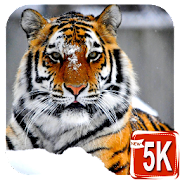 HD Animals Wallpaper