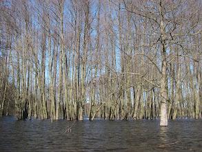 Photo: las w rzece