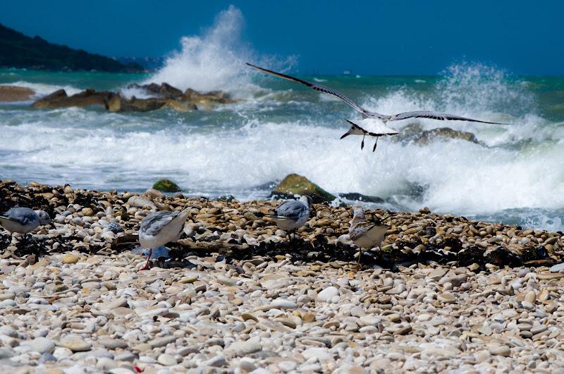 Spiaggia di Federica.G