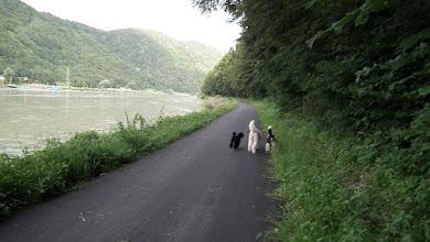 Photo: Ein kilometerlanger Rad- und Wanderweg direkt an der Donau bei Engelhartszell ladet zum Spazieren ein.