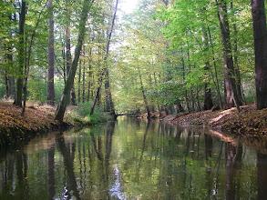 Photo: jeszcze przez las