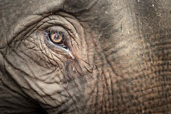 Lacrime di un Gigante di Roberto Pazzi Photography