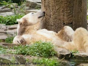 Photo: Hm, jetzt aufstehen ?