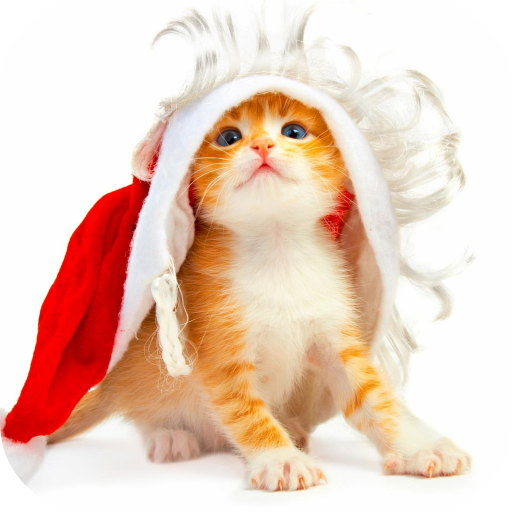 Funny Christmas Cat Wallpaper Apps On Google Play