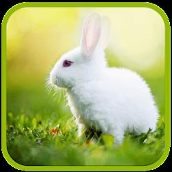 White Rabbit Live Wallpaper