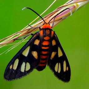 Kupu-Kupu by Rizal Marsa - Animals Insects & Spiders (  )