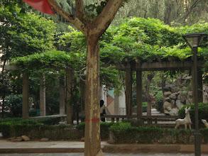 Photo: 指鹿为马 #七一草泥马节