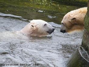Photo: Knut ist wieder im Wasser und weiter geht der Spass :-)