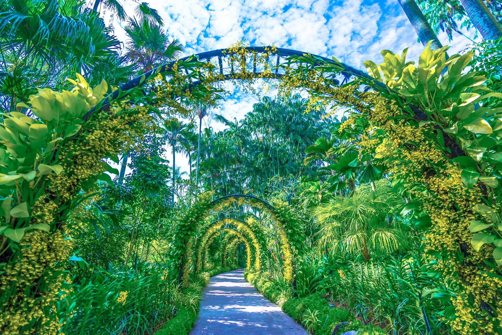 シンガポール植物園(ボタニック・ガーデン) ナショナル・オーキッド・ガーデン(国立ラン園)4