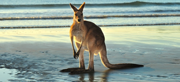 Austrália: Informações úteis
