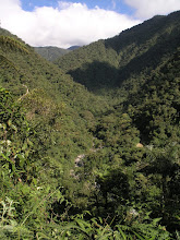 Photo: A valley in the cloud forest.