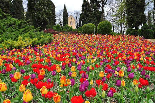 la natura dipinge di flori