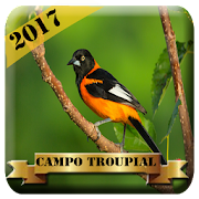 App Canto de Campo Troupial APK for Windows Phone