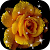 Rose Live Wallpaper file APK for Gaming PC/PS3/PS4 Smart TV
