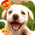 Cute Puppy Wallpapers – Puppies Wallpapers icon