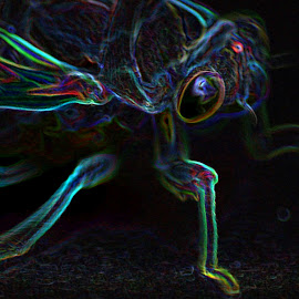 glowing cicada by Eric  Adamski - Digital Art Animals ( eye, green, glowing, cicada, bug, neon, legs, purple, wing, glow,  )