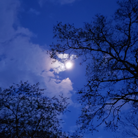 Full Moon by Susanne Carlton - City,  Street & Park  Night