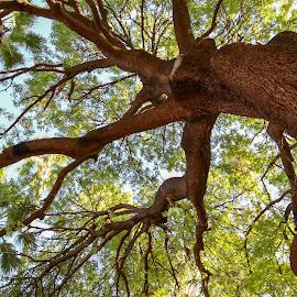 nice trees by Alina Cristea - Nature Up Close Trees & Bushes ( sky, marrakech, tree, travel, colors,  )
