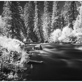 Castle Creek in Summer by George Kremer - Black & White Landscapes ( water, stream, black and white, flowing, infrared, rocky mountains, white, soft, mountains, creek, trees, long exposure, rocks, aspen colorado, black, filter, river )