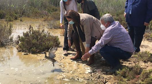 Sueltan 30 ejemplares de cercetas pardillas en Punta Entinas-Sabinar