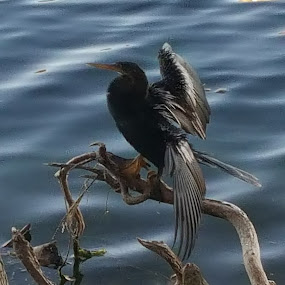 Basking in the Sun by Tameem Sanjar - Animals Birds (  )