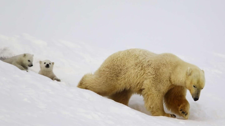 The Polar Bear Family and Me