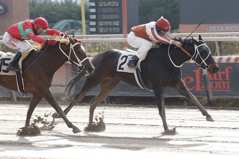 Chica de Arles (Rydilluc) gana Condicional (1000m-Arena-HCH). - Staff ElTurf.com