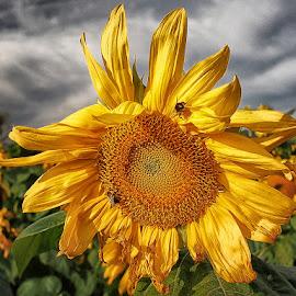 BUGS ON PLANTS by Stanley P. - Flowers Single Flower (  )