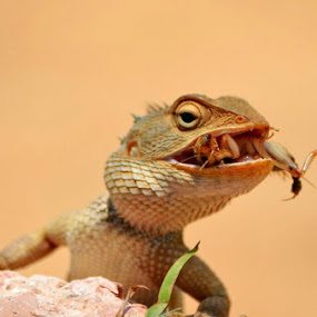 Kill by Ravi Shankar - Animals Reptiles