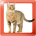 Animals in Pictures icon