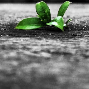 alone by Sonali Majumder - Novices Only Flowers & Plants