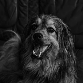 Gia by Jose Maria Vidal Sanz - Animals - Dogs Portraits ( dog, pet )