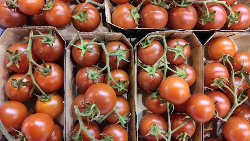 Tomates Ecosur