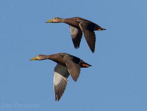 Photo: Quintana Ducks