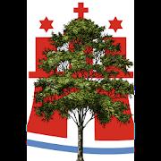 Baumkataster Hamburger Straßenbäume